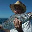 Image of Silver gemfish