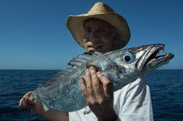 Image of Common gemfish