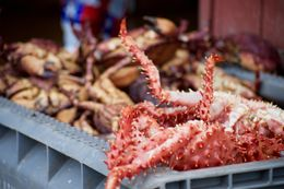 Image of Southern king crab