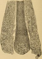 Image of Trichophyton