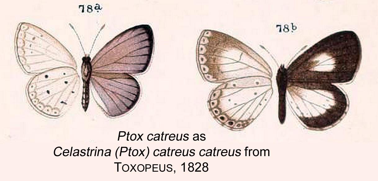 Image of Ptox