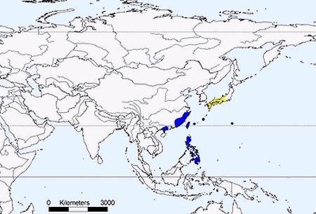 """<span class=""""translation_missing"""" title=""""translation missing: en.medium.untitled.map_image_of, page_name: &lt;i&gt;Gorsachius goisagi&lt;/i&gt; (Temminck 1836)"""">Map Image Of</span>"""