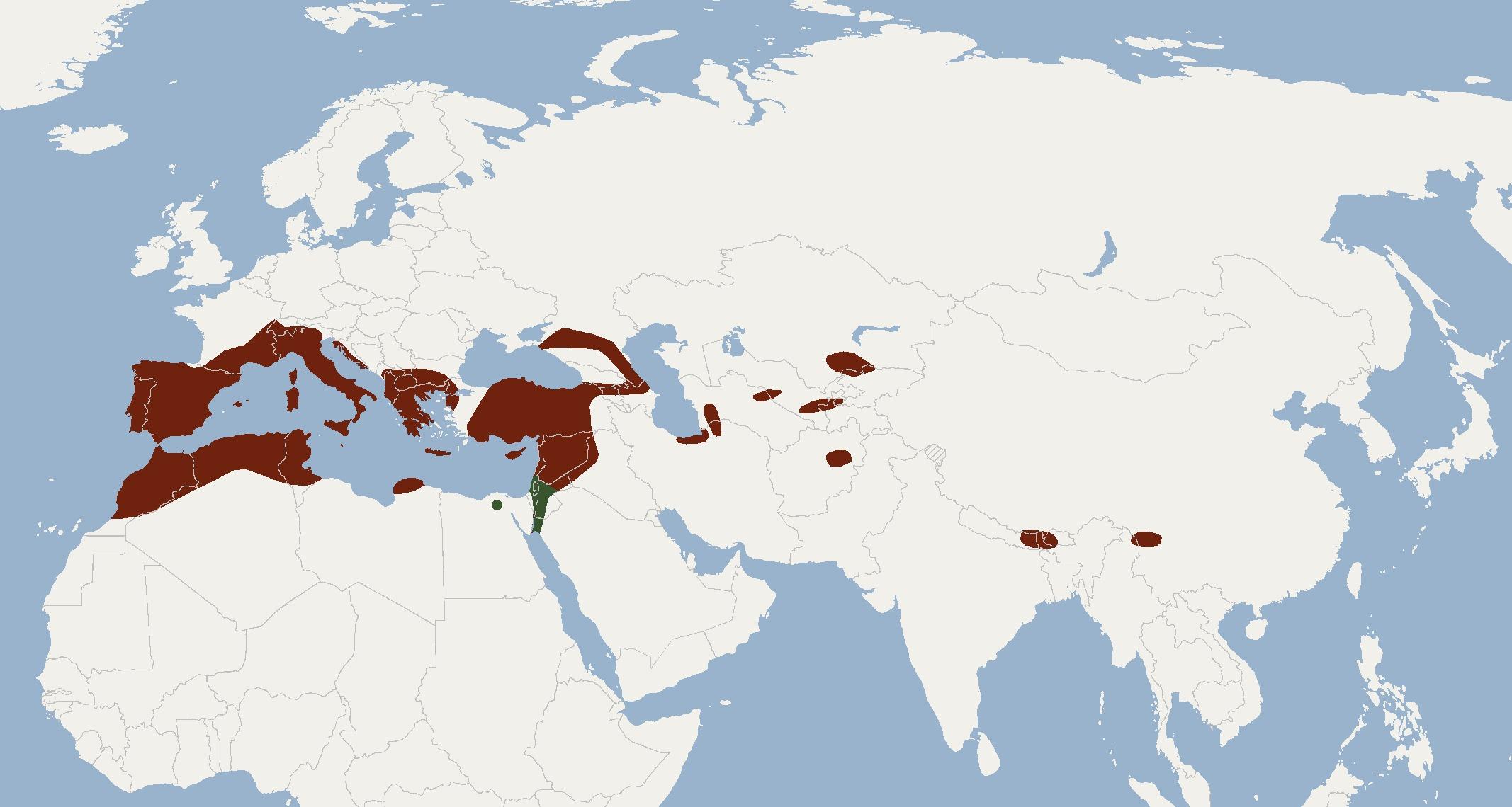 Map of European free-tailed bat