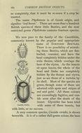 Image of <i>Cassida</i> (<i>Odontionycha</i>) <i>viridis</i> Linnaeus 1758