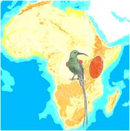 Map of Red-tufted Sunbird