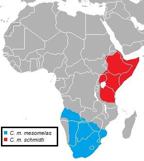 Map of Black-backed Jackal
