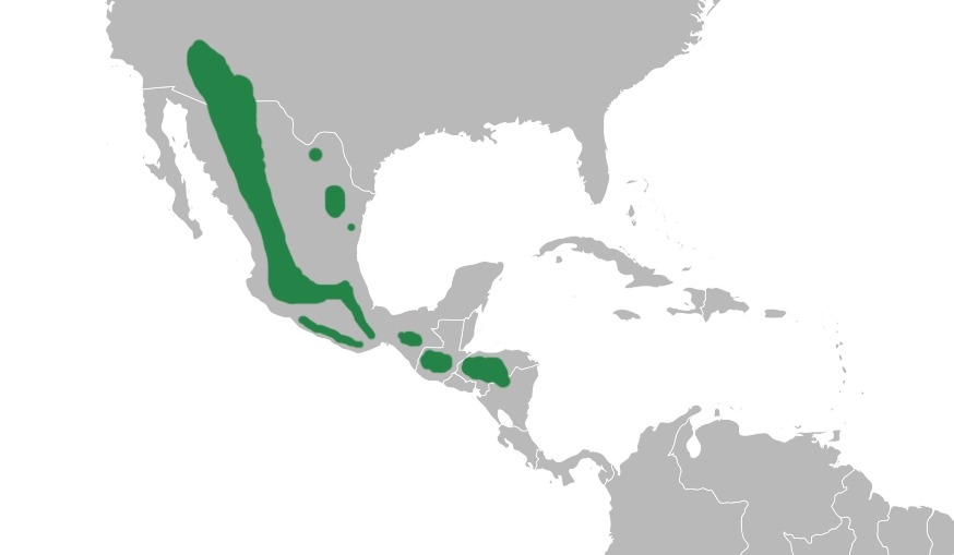 Map of Olive Warblers