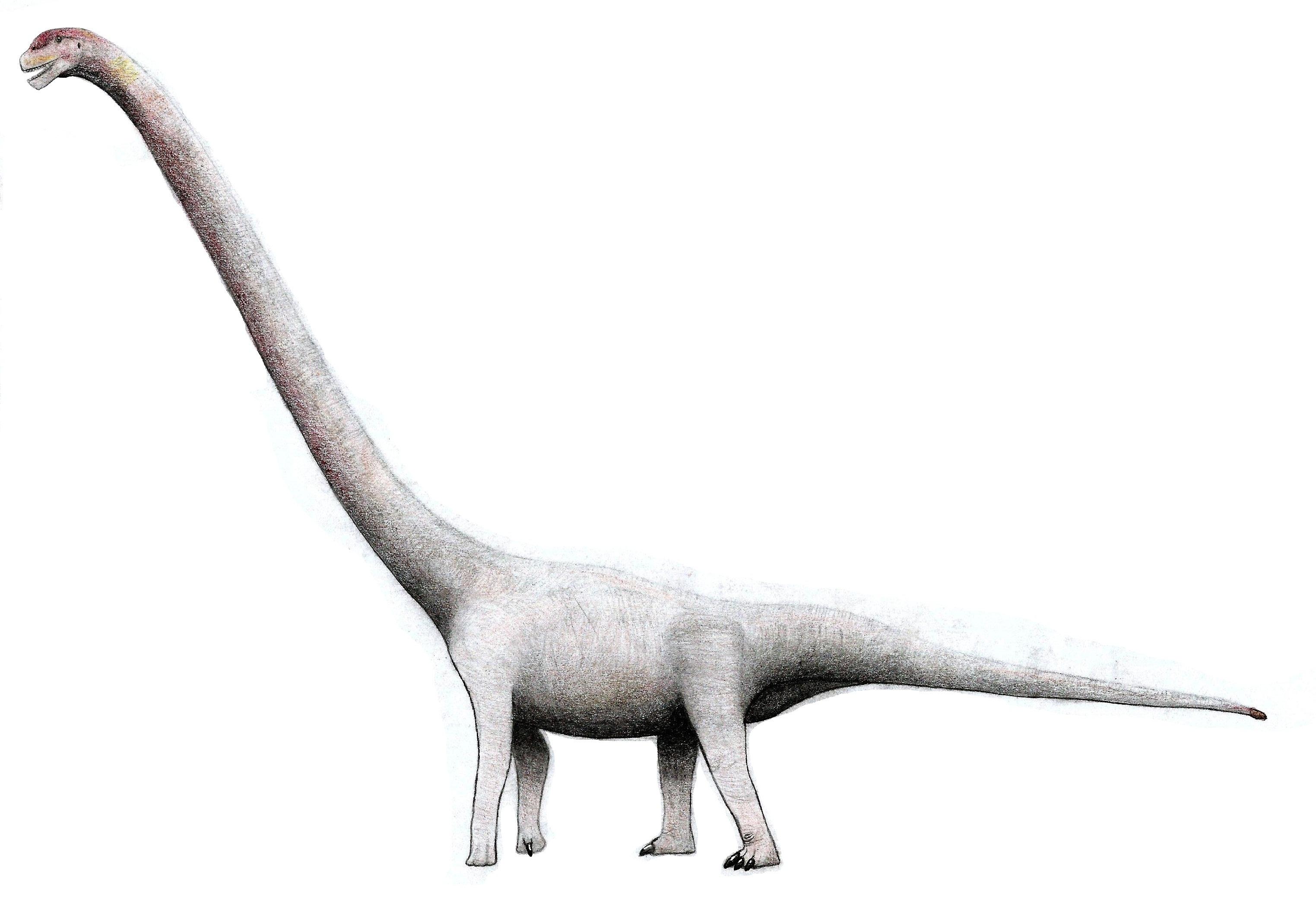 Image of Omeisaurus