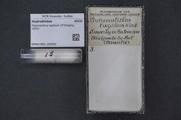 Image of Potamolithus