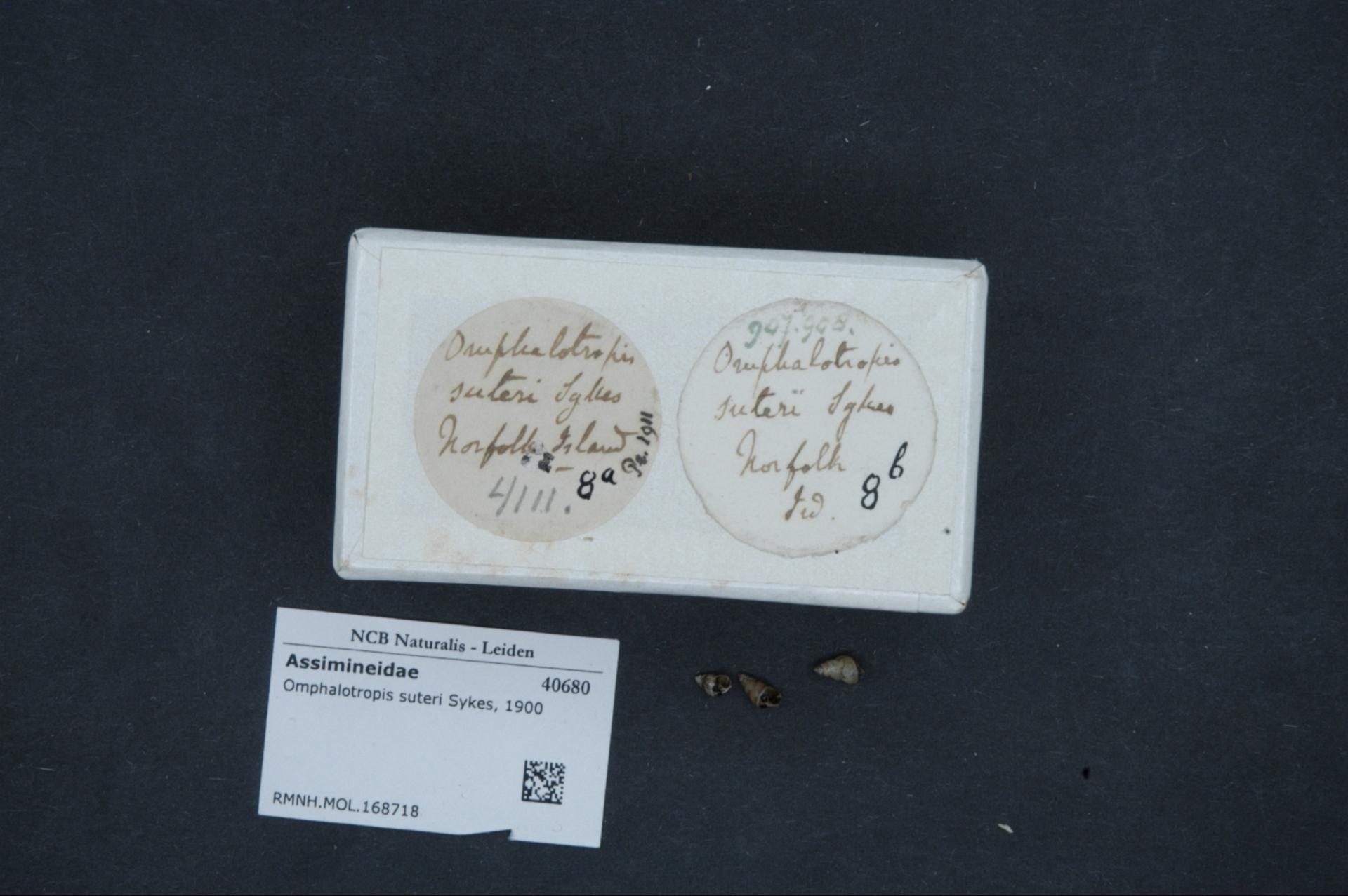 Image of <i>Omphalotropis suteri</i> Sykes 1900