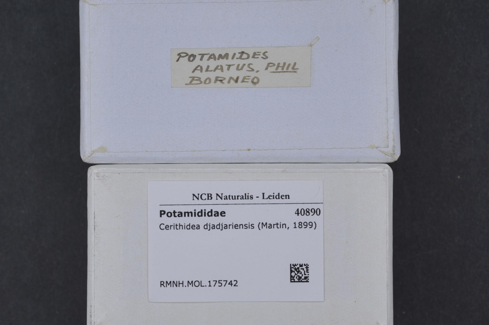 Image of <i>Cerithidea djadjariensis</i>