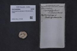 Image of Dendropoma