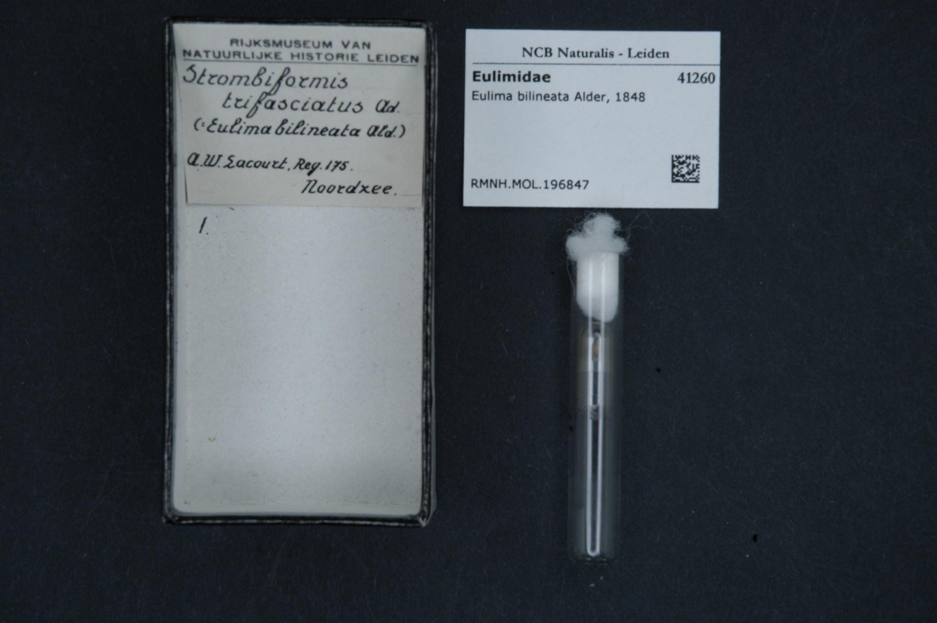 Image of <i>Melanella bilineata</i> Alder 1848