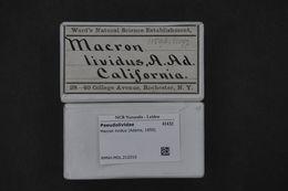 Image of Macron