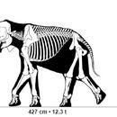 Image of <i>Elephas recki</i>