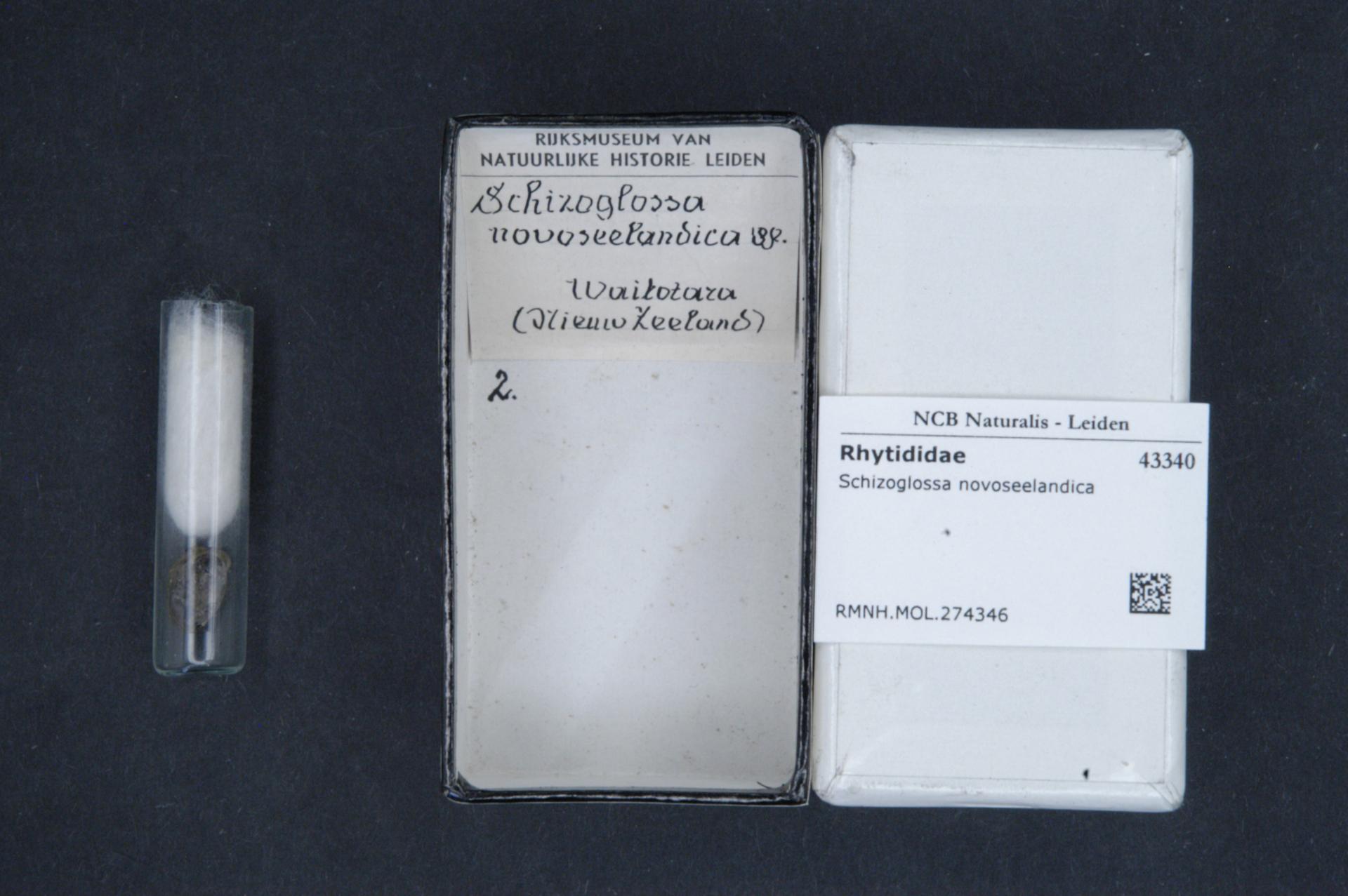 Image of <i>Schizoglossa novoseelandica</i> (L. Pfeiffer 1862)