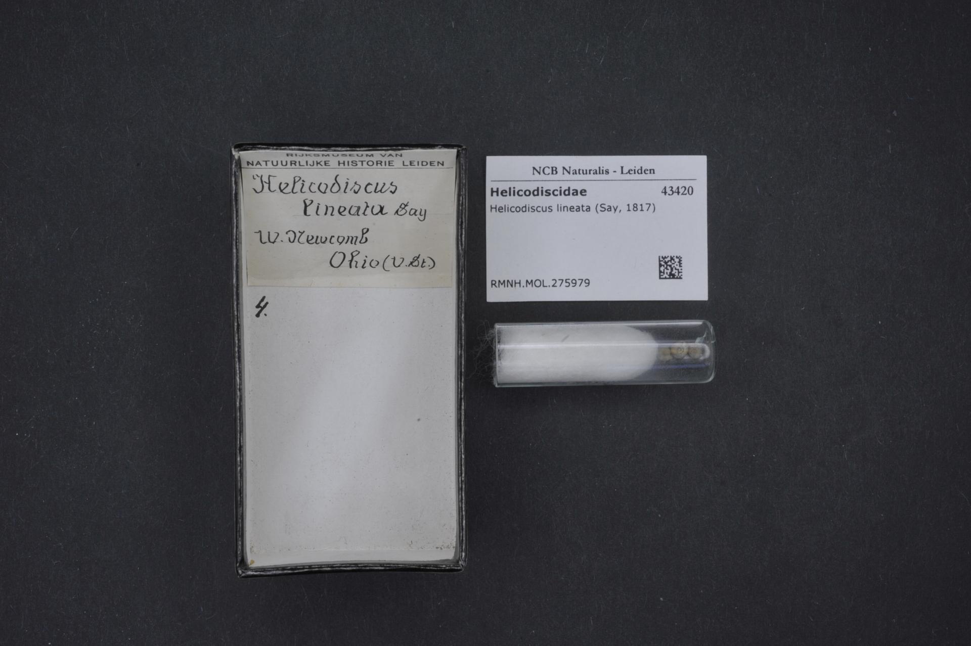 Image of Helicodiscus