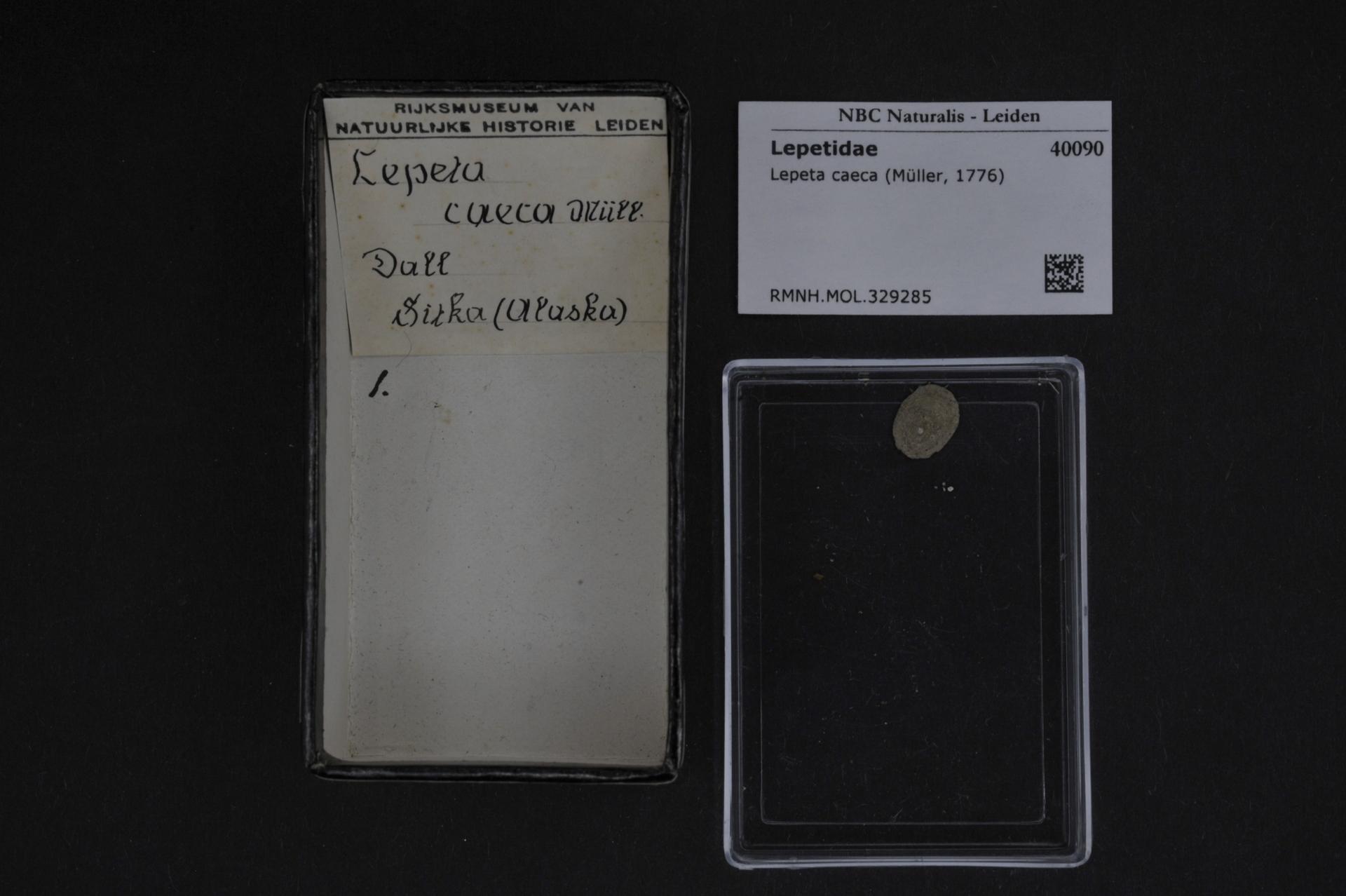 Image of Lepeta