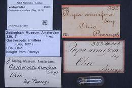 Image of <i>Gastrocopta armifera</i> (Say 1821)