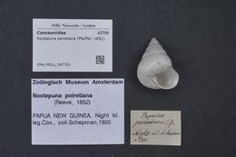 Image of Noctepuna