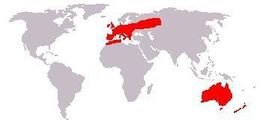 Map of Old World rabbits