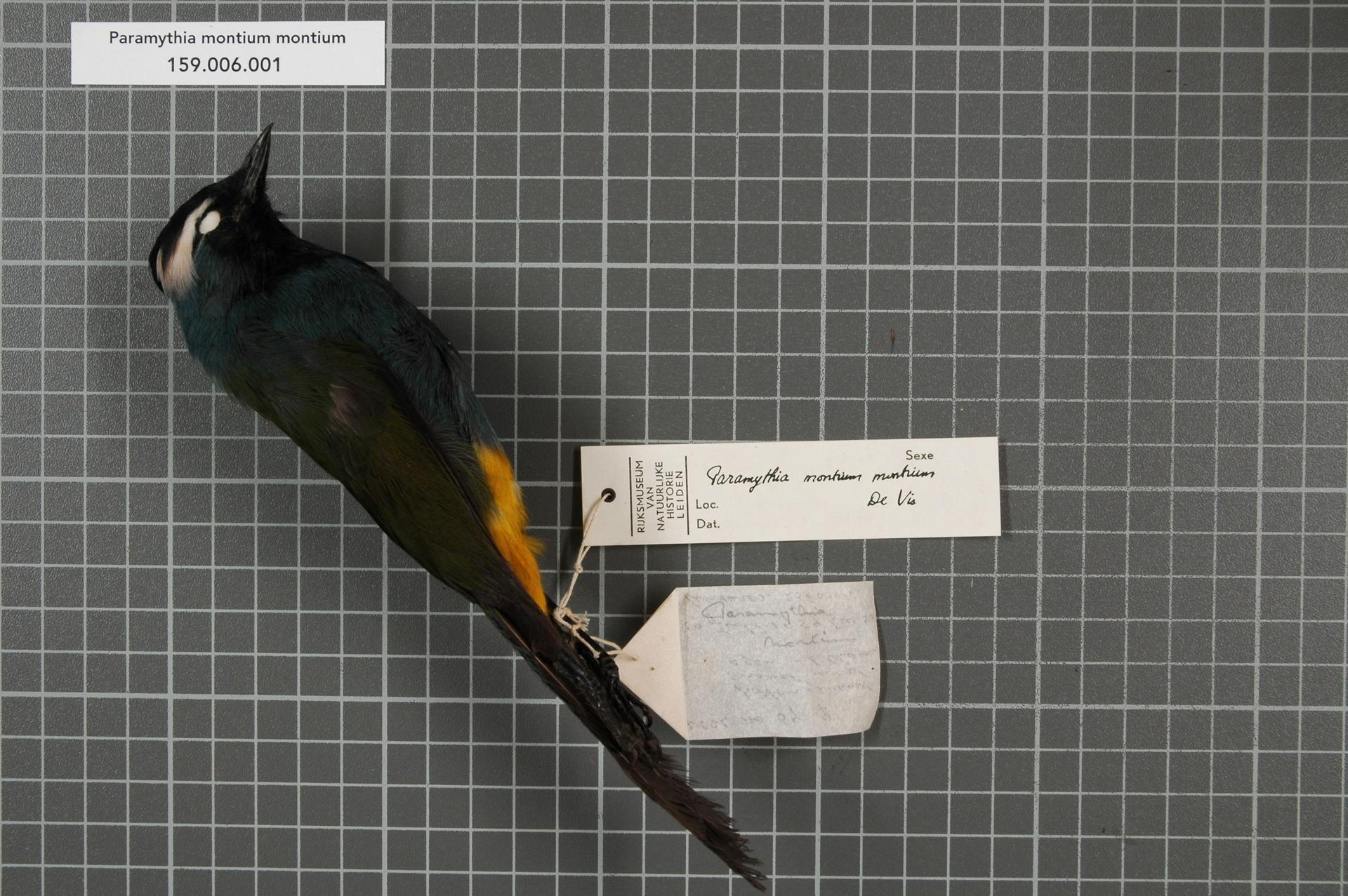Image of Crested Berrypecker