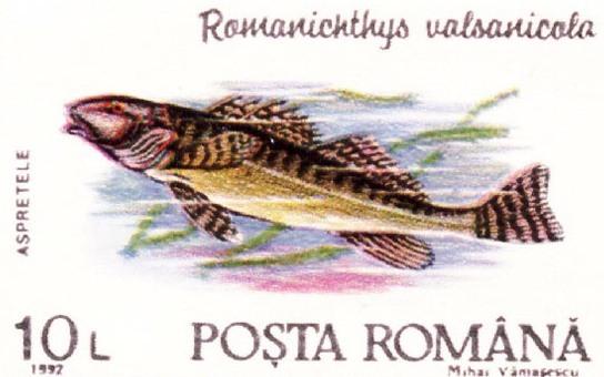Asprete, el pez de 65 millones de años de Rumania.