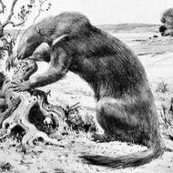 Image of Hapalops Ameghino 1887