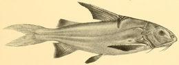 Image of Gagata