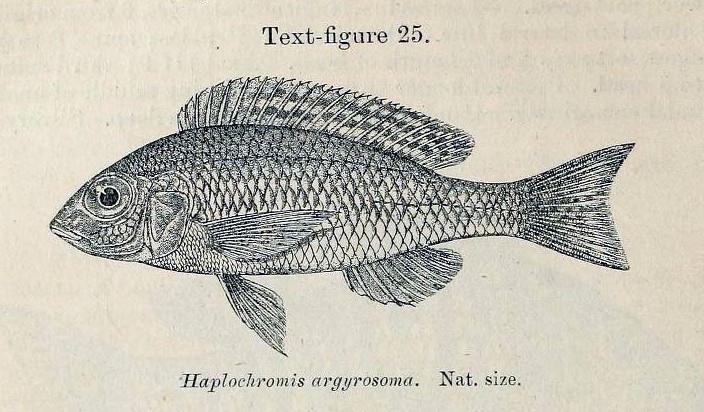 Image of Otopharynx