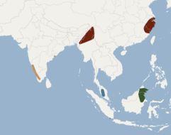 "<span class=""translation_missing"" title=""translation missing: en.medium.untitled.map_image_of, page_name: Burmese Whiskered Bat"">Map Image Of</span>"