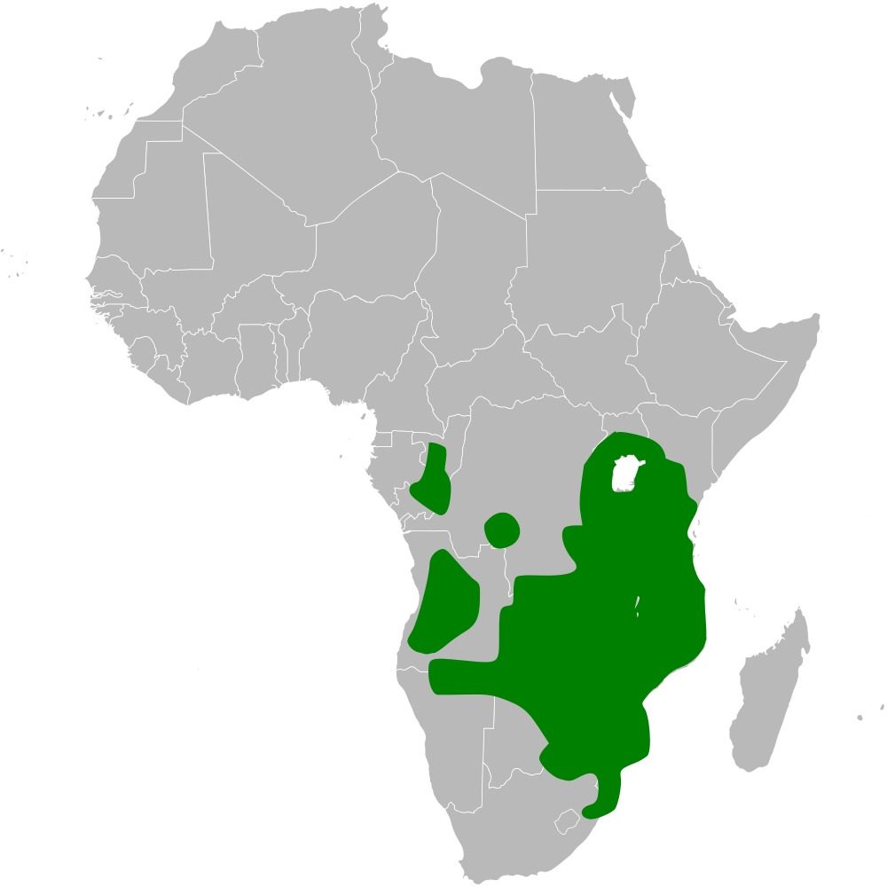 Map of African Penduline-Tit