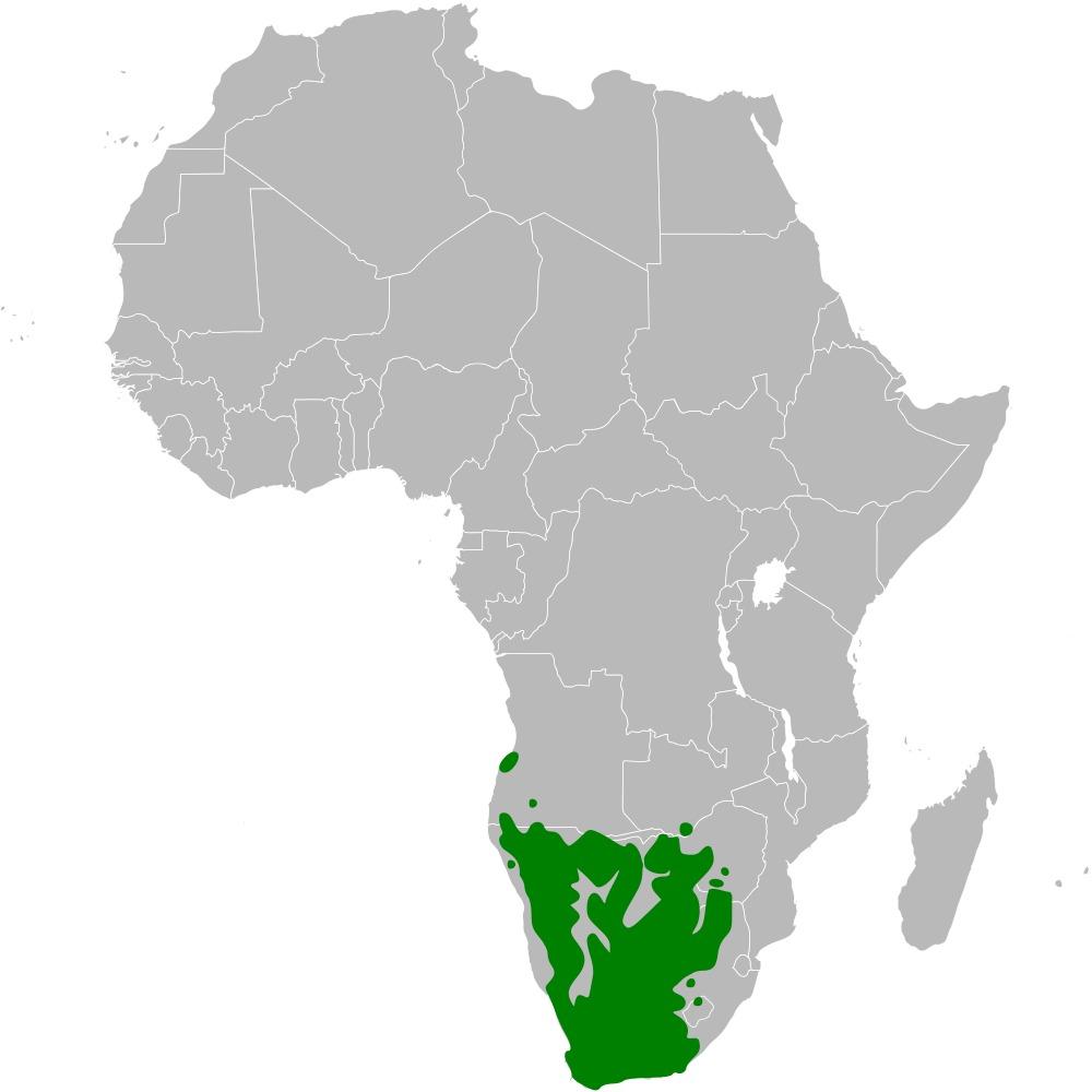 Map of Cape Penduline Tit