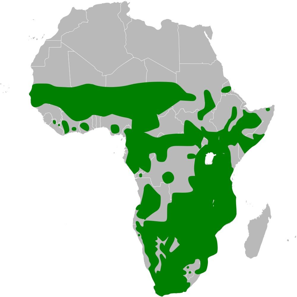 Map of Anthoscopus Cabanis 1850