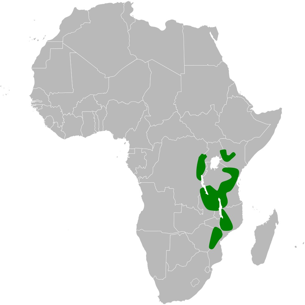 Map of White-tailed Crested Flycatcher