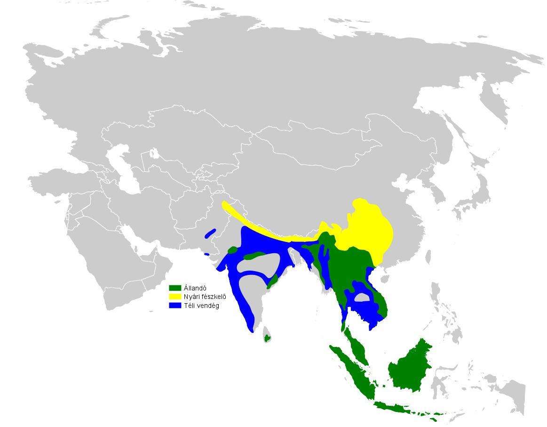 Map of Canary-flycatcher