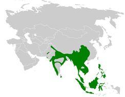 Map of Stenostiridae