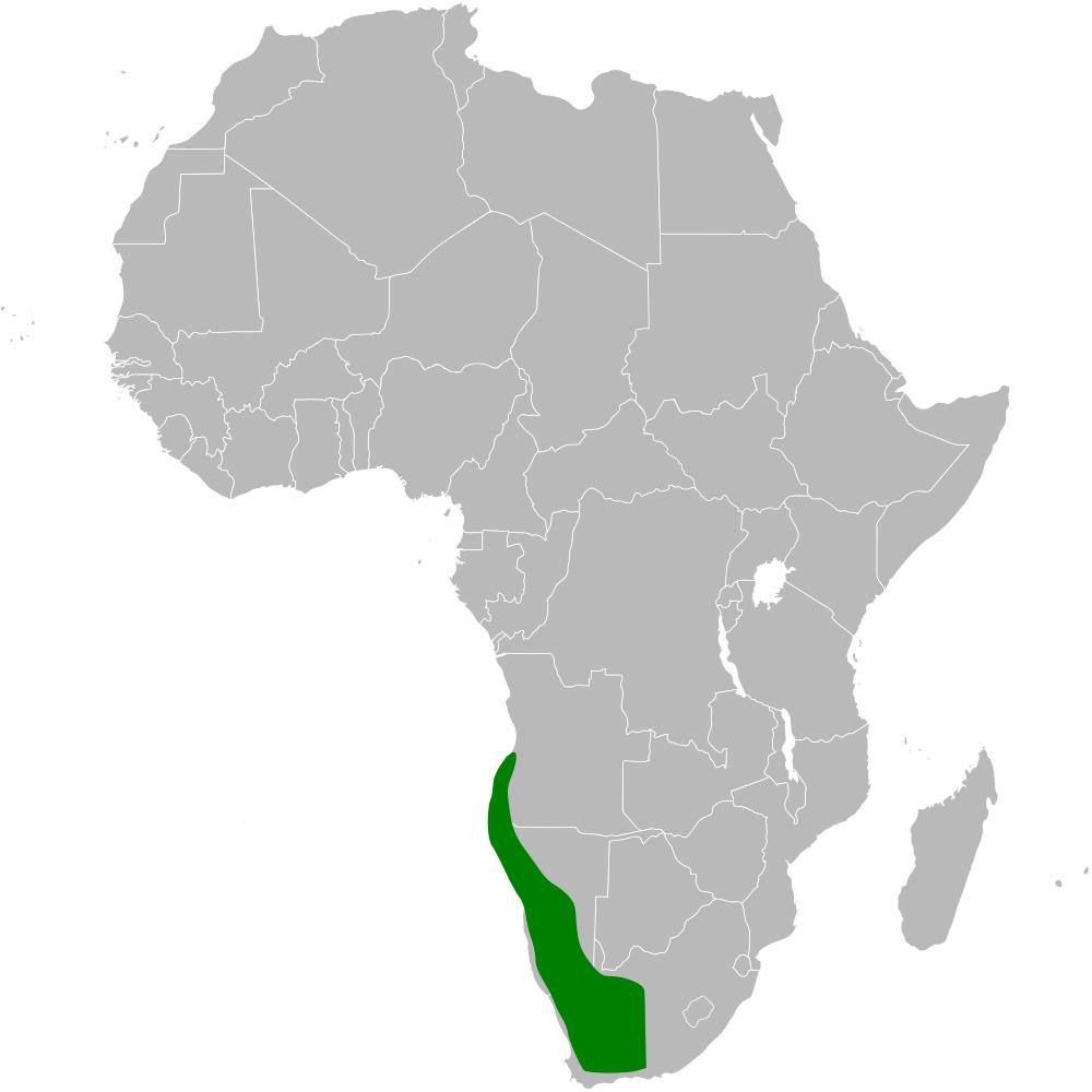 "<span class=""translation_missing"" title=""translation missing: en.medium.untitled.map_image_of, page_name: Karoo Long-billed Lark"">Map Image Of</span>"
