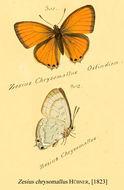 Image of <i>Zesius chrysomallus</i> Hübner (1823)