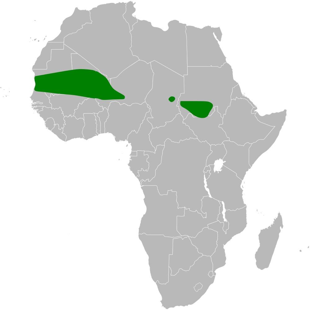 "<span class=""translation_missing"" title=""translation missing: en.medium.untitled.map_image_of, page_name: Kordofan Bush Lark"">Map Image Of</span>"