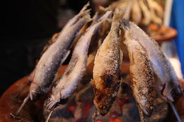 Image of Ayu sweetfish