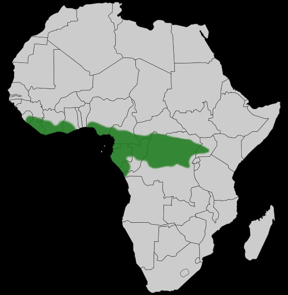 "<span class=""translation_missing"" title=""translation missing: en.medium.untitled.map_image_of, page_name: African Foam-nest Treefrog"">Map Image Of</span>"