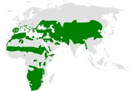"<span class=""translation_missing"" title=""translation missing: en.medium.untitled.map_image_of, page_name: Calandrella Kaup 1829"">Map Image Of</span>"