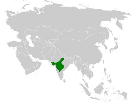 "<span class=""translation_missing"" title=""translation missing: en.medium.untitled.map_image_of, page_name: Sykes&#39;s Lark"">Map Image Of</span>"