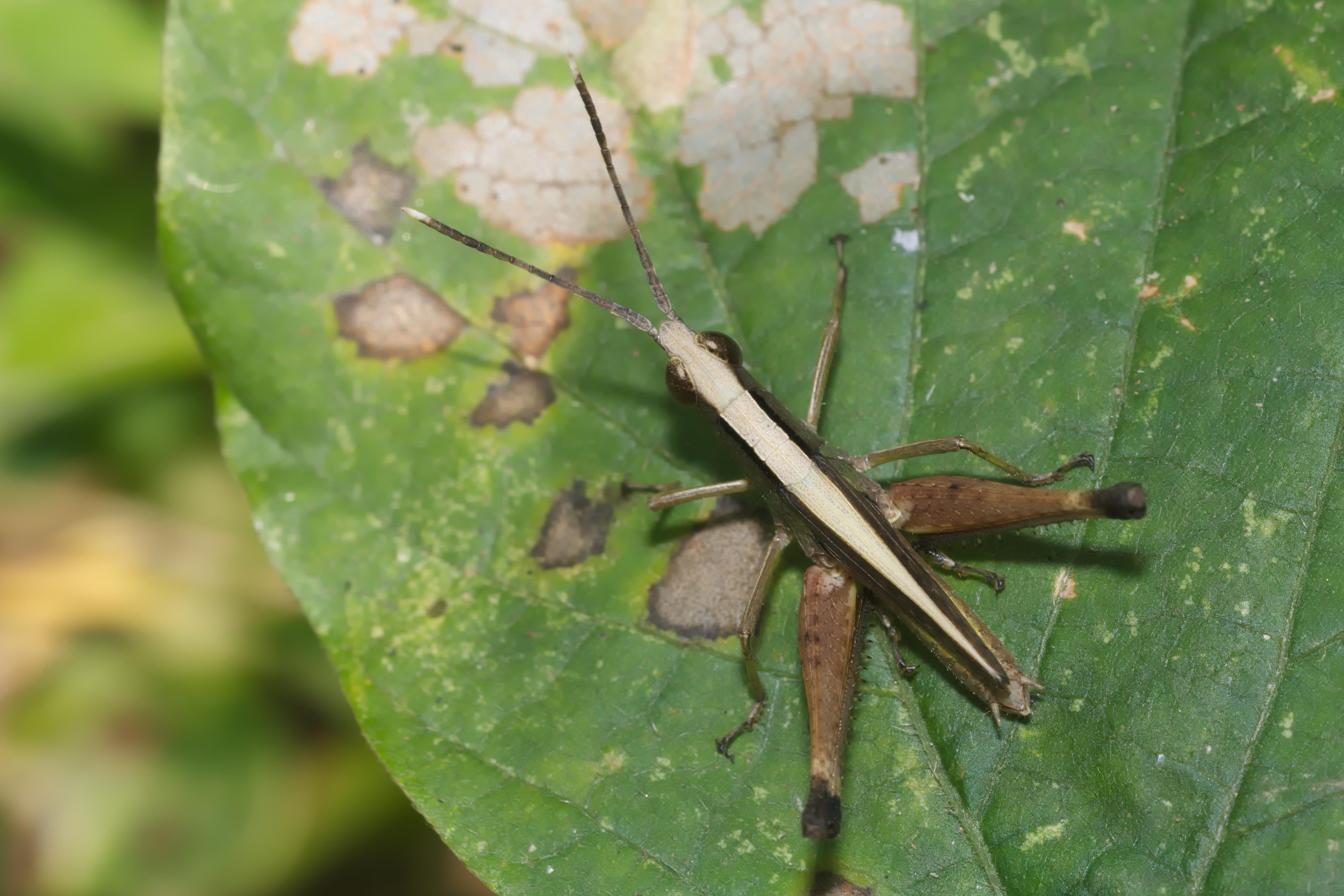 Image of monkey grasshoppers