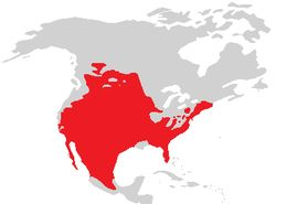 Map of American spadefoot toads