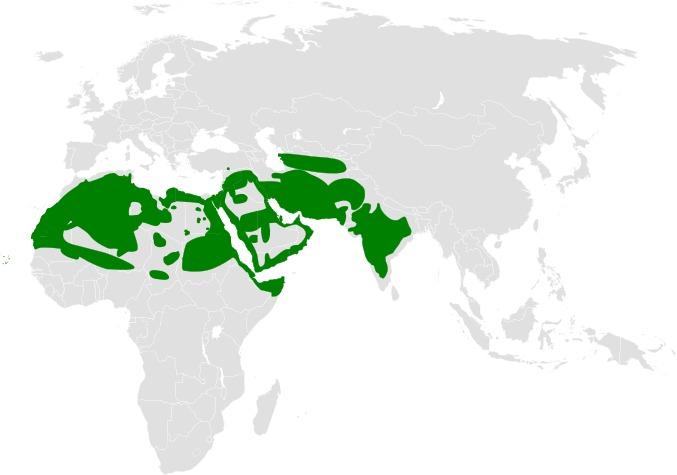 "<span class=""translation_missing"" title=""translation missing: en.medium.untitled.map_image_of, page_name: Ammomanes Cabanis 1851"">Map Image Of</span>"