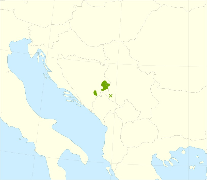 Map of Serbian Spruce