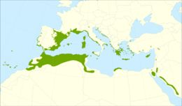 Map of Phoenician Juniper