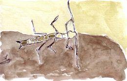 Image of <i>Gollumjapyx smeagol</i> Sendra & Ortuno